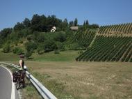 Vignes-côtelettes