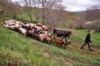 la grange à ludo-54