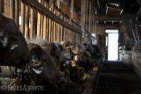 la grange à ludo-75