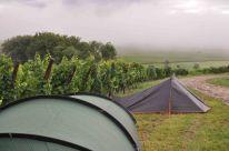 Bivouac humide dans le vignoble de Riquewihr.