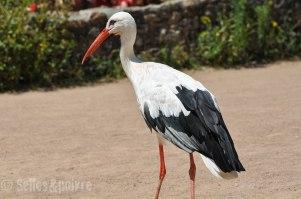 Une vraie storki.