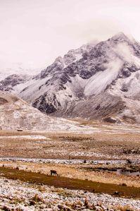 Altiplano-5