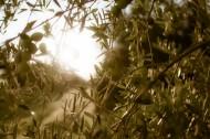 Nuit dans une oliveraie