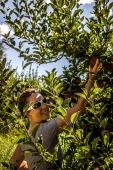 Dégustation de pommes à la source
