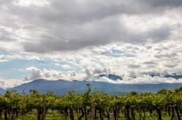 Vin Argentine_4