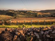 Vignobles de Waiheke