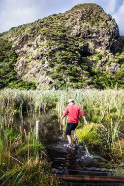 Première rando à Waitakere Range, avec Guillaume pour guide